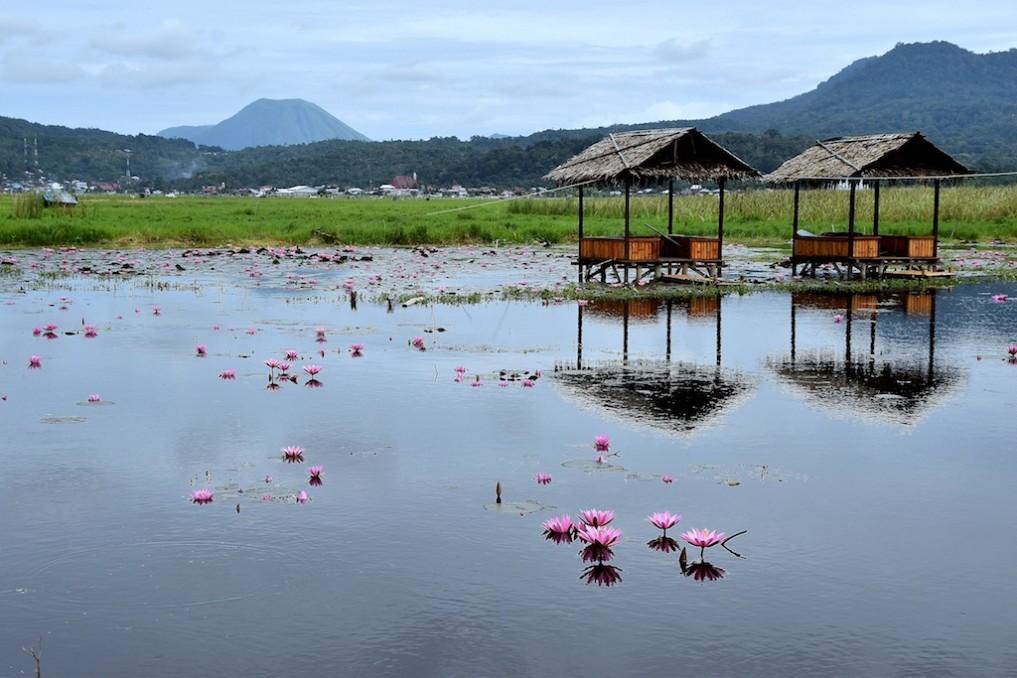 01 Seerosen bei Tondano, Nord-Sulawesi