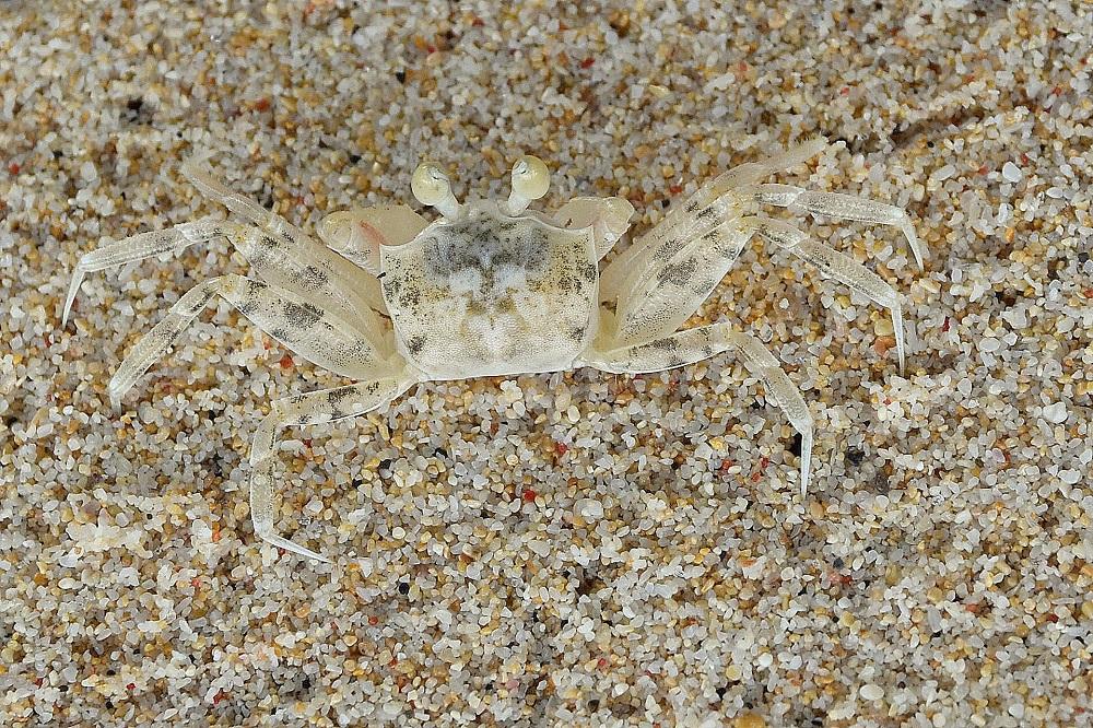 11 Beobachte die Krabben beim Versteckspiel ...