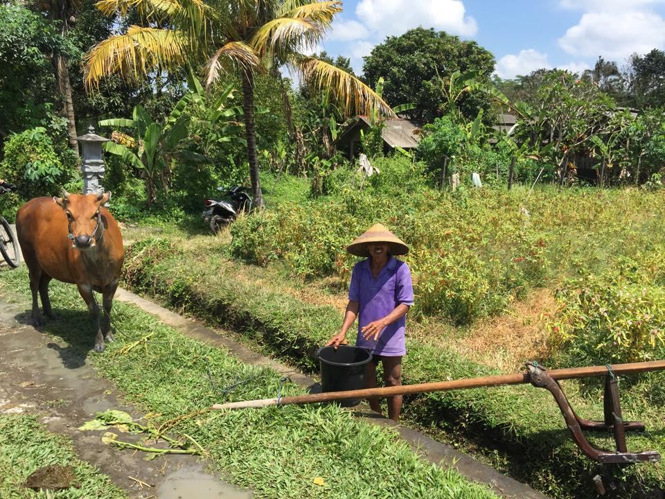 Reisbauern Bali