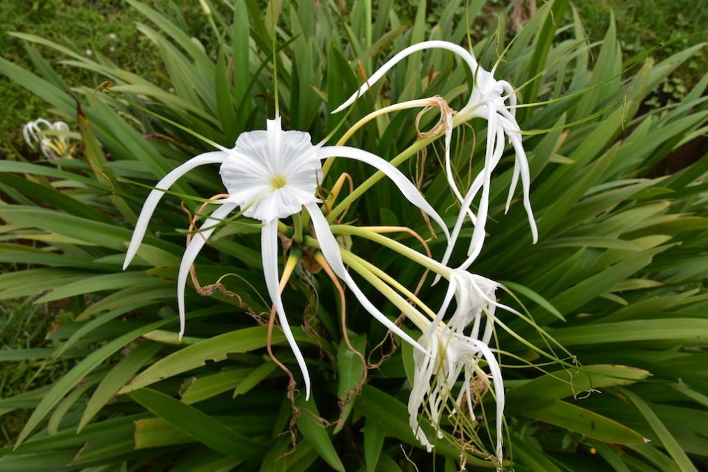 Floristische Schönheiten inmitten der Reisfelder, Langoan
