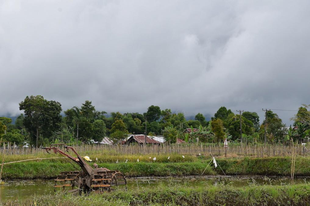 15 Pflug im Reisgewässer, Langoan