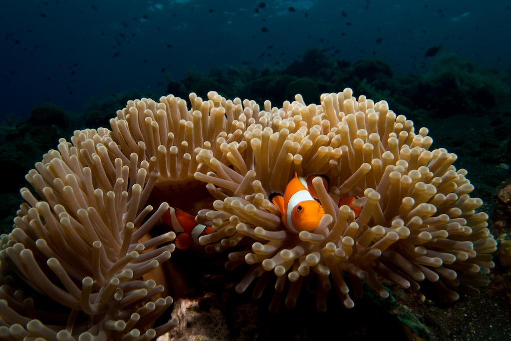 18 - Nemo