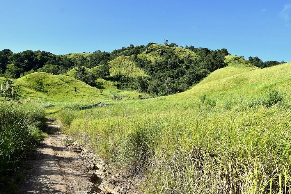 23 Das Hügelland mit Alang Alang-Gras bei Pulisan hat es uns angetan ...