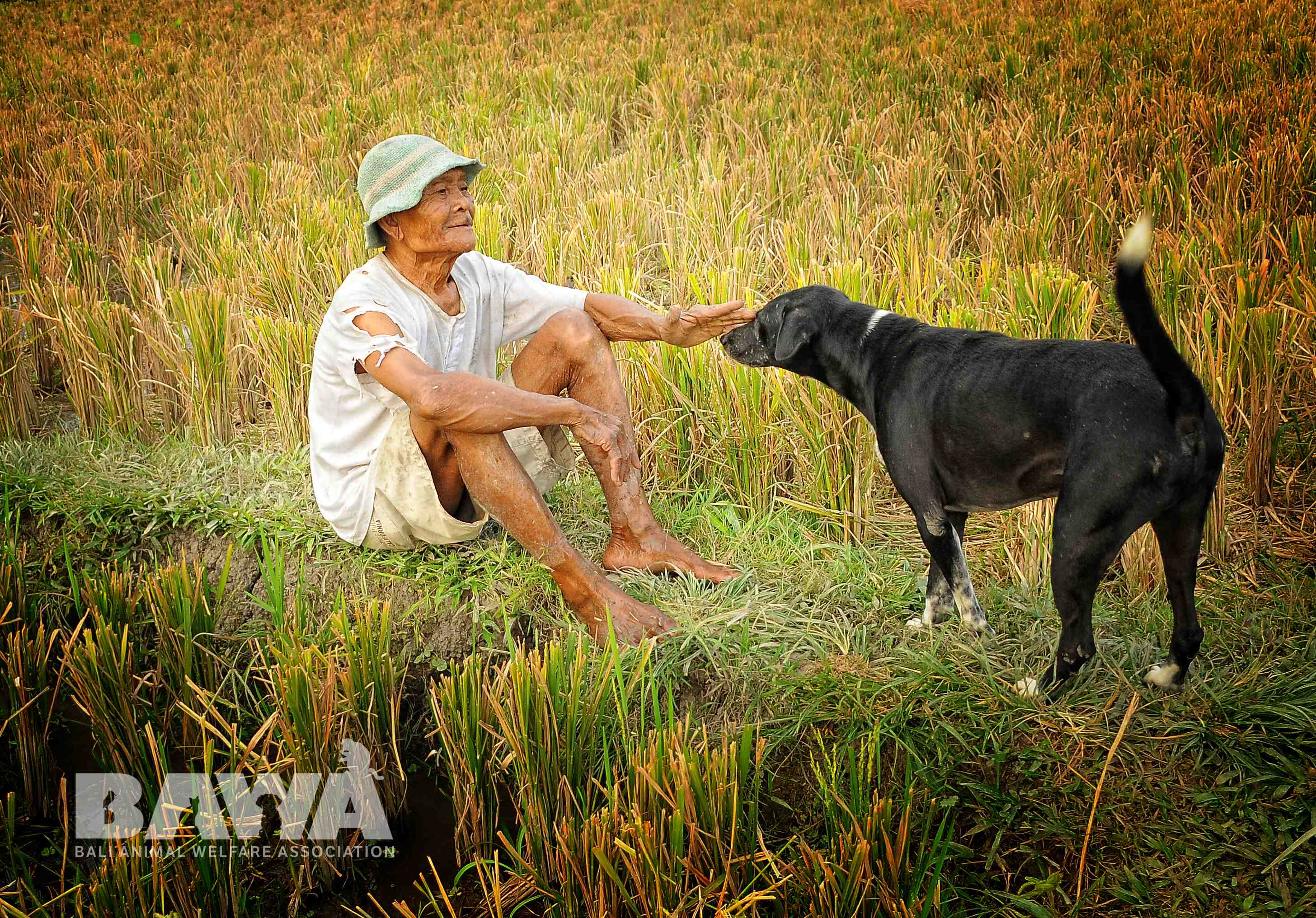 2_Pak_Sawah_Ubud_MonkeyForest_1_Sept_2014_Play_with_Male_Dog