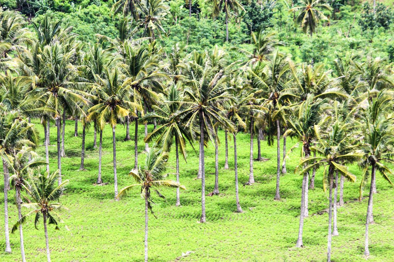 4 Wochen Indonesien Rundreise - Palmenhaine Sumbawa