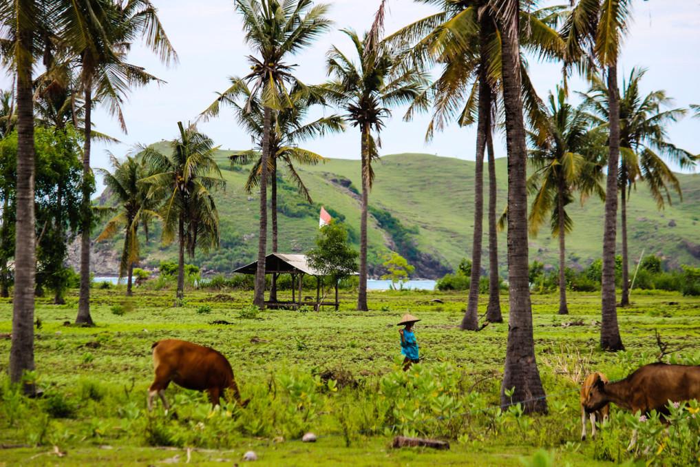 4 Wochen Indonesien Rundreise - Weg nach Gerupuk