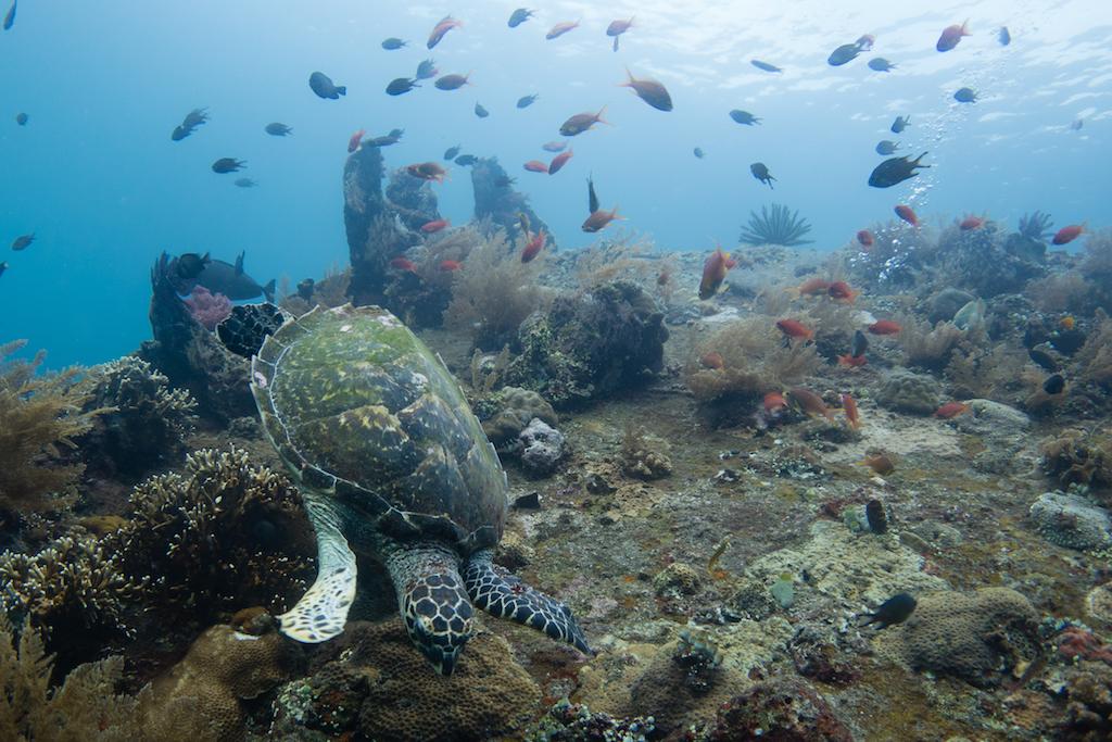 59-Schildkröte