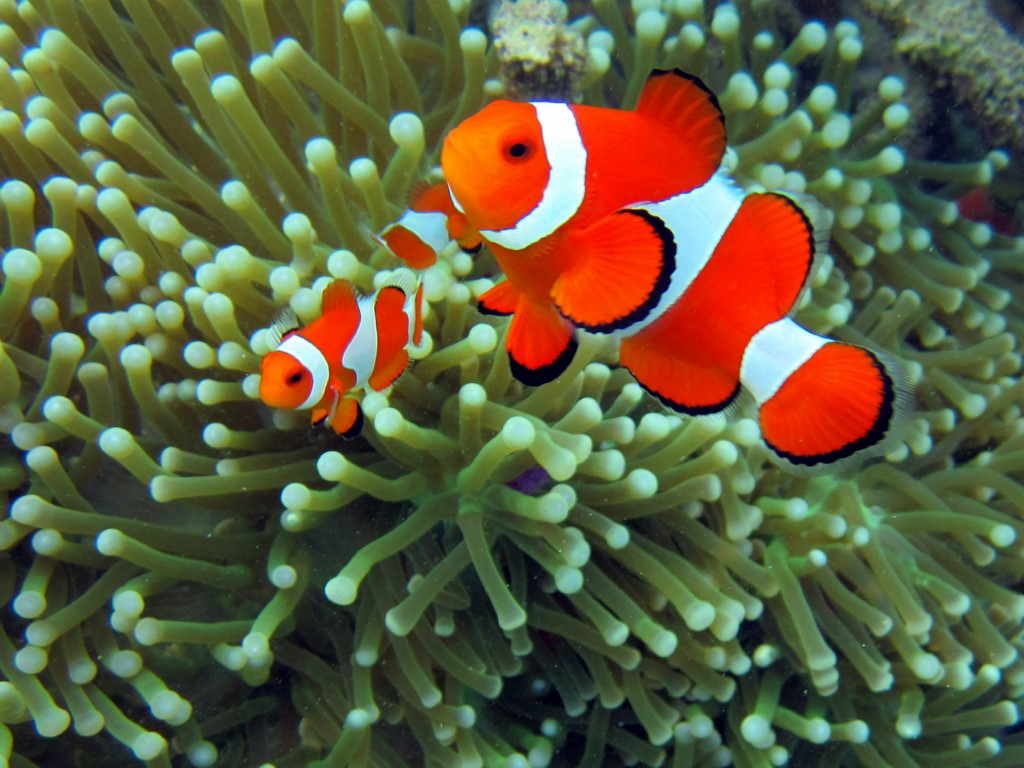 7. Nemo [1024x768]