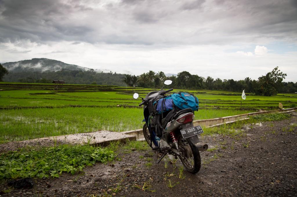 Freiheit auf Sulawesi