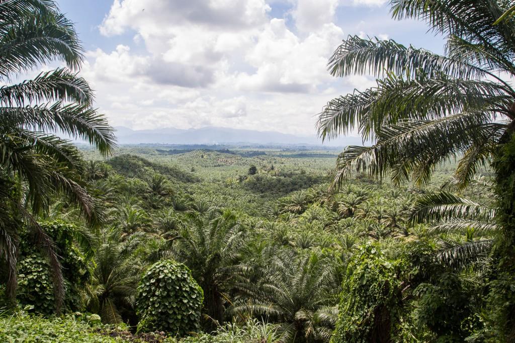 Natur auf Sulawesi