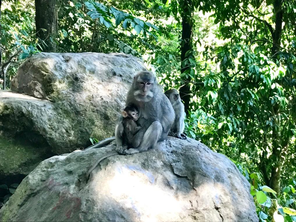Affenwald nahe Senggigi
