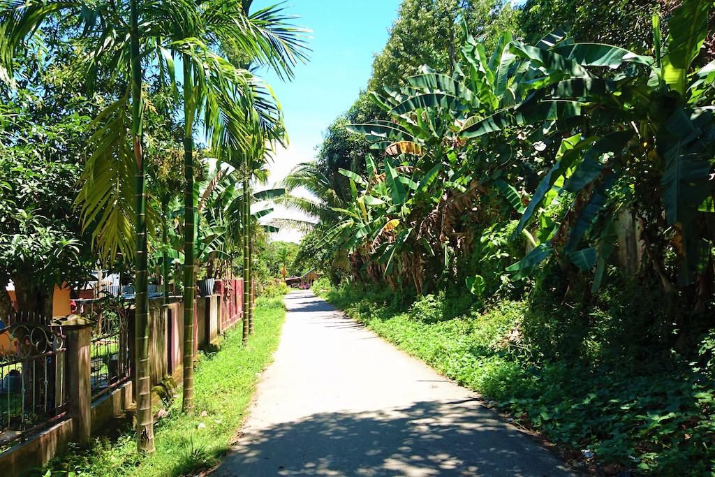 Areca Palmen Betelnuss 1