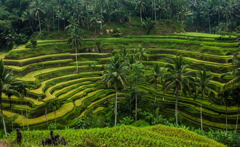 Bali (11 of 13)