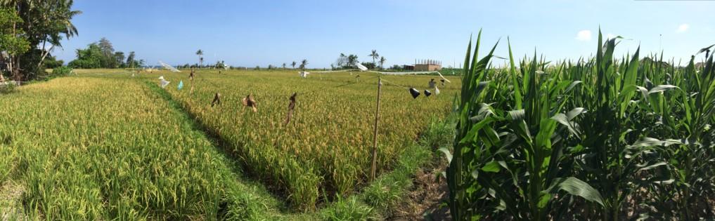Bali Kosten 5
