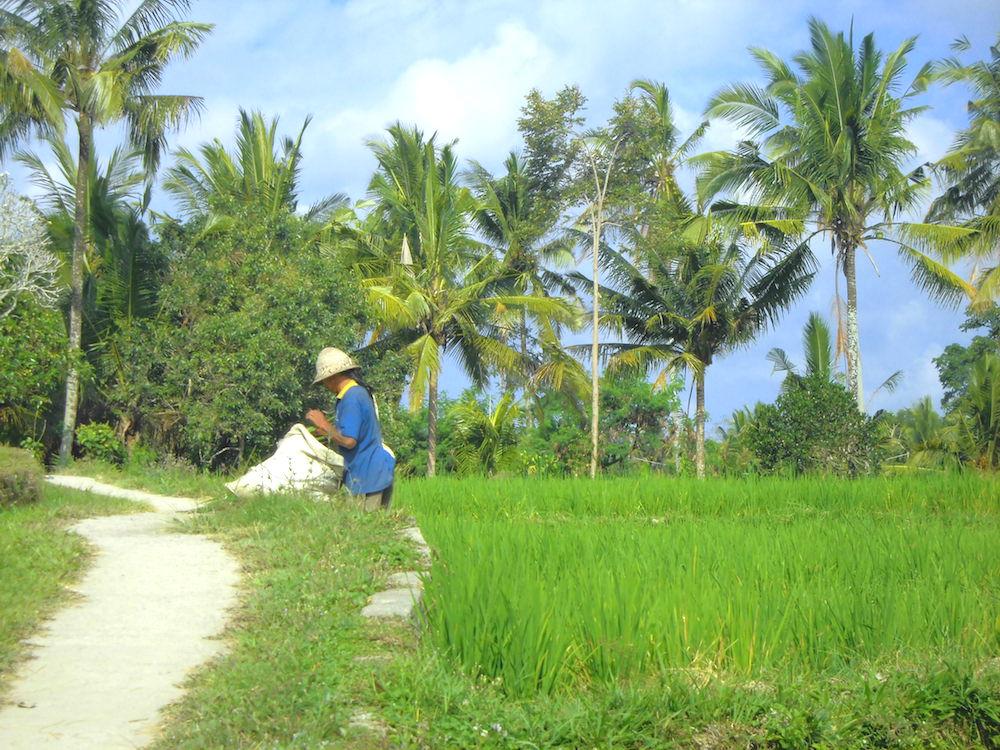 Bali Lombok Rundreise Ubud