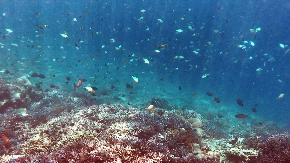 Bali Lombok Rundreise schnorcheln Gili Trawangan