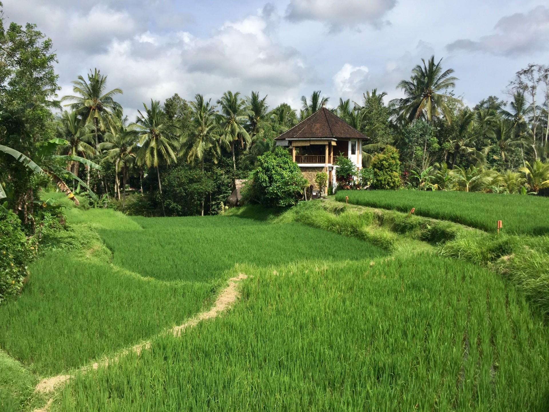 Bali Yoga Ubud House