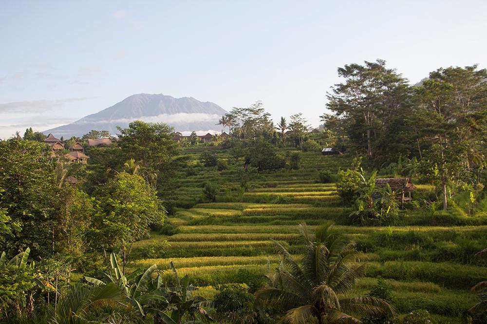 Sideman Bali