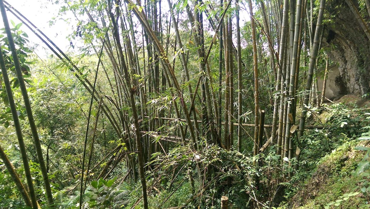 Bambus Toraja