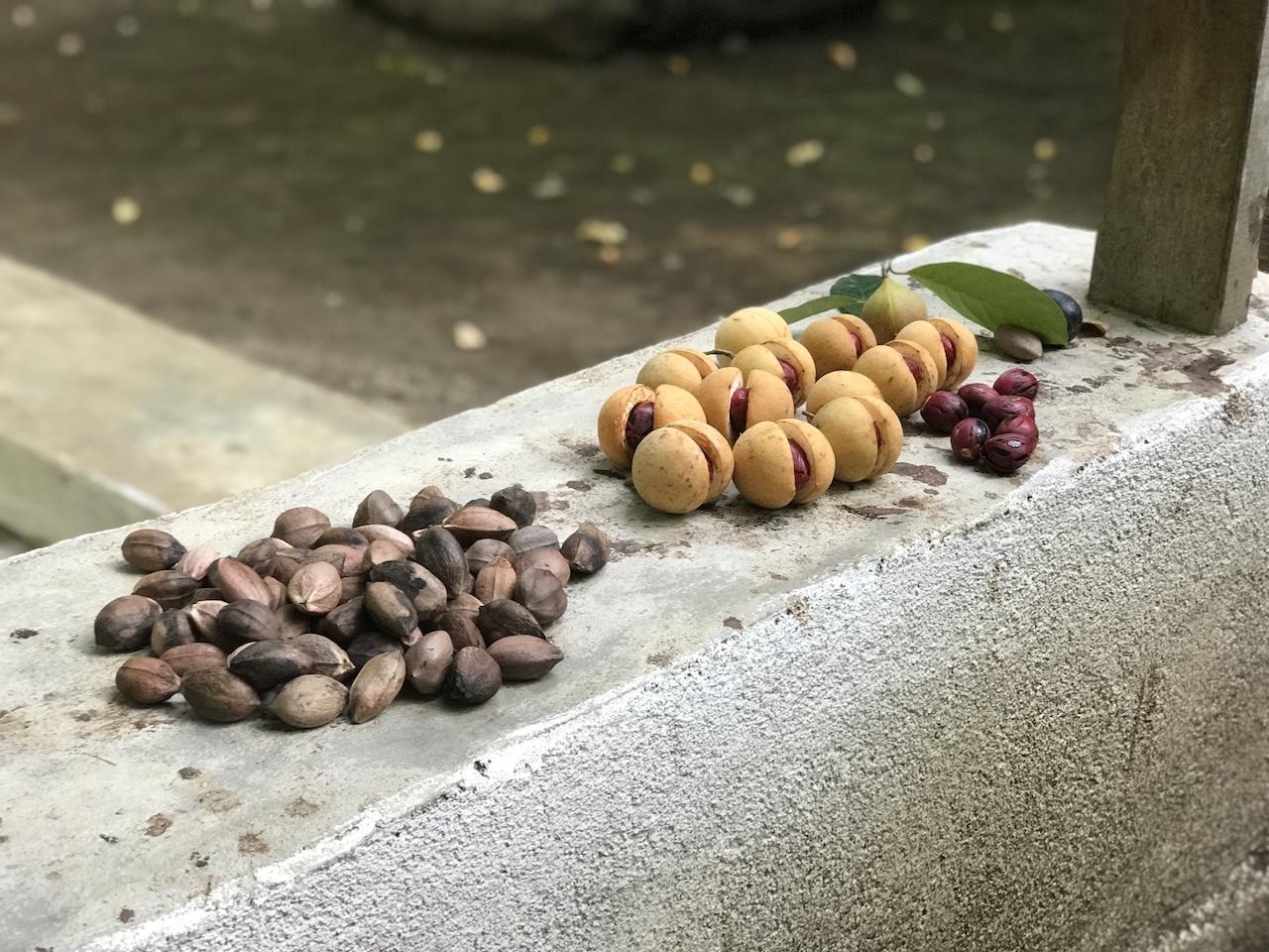Banda-Inseln-Banda-Neira-Nutmegs und Kenaris