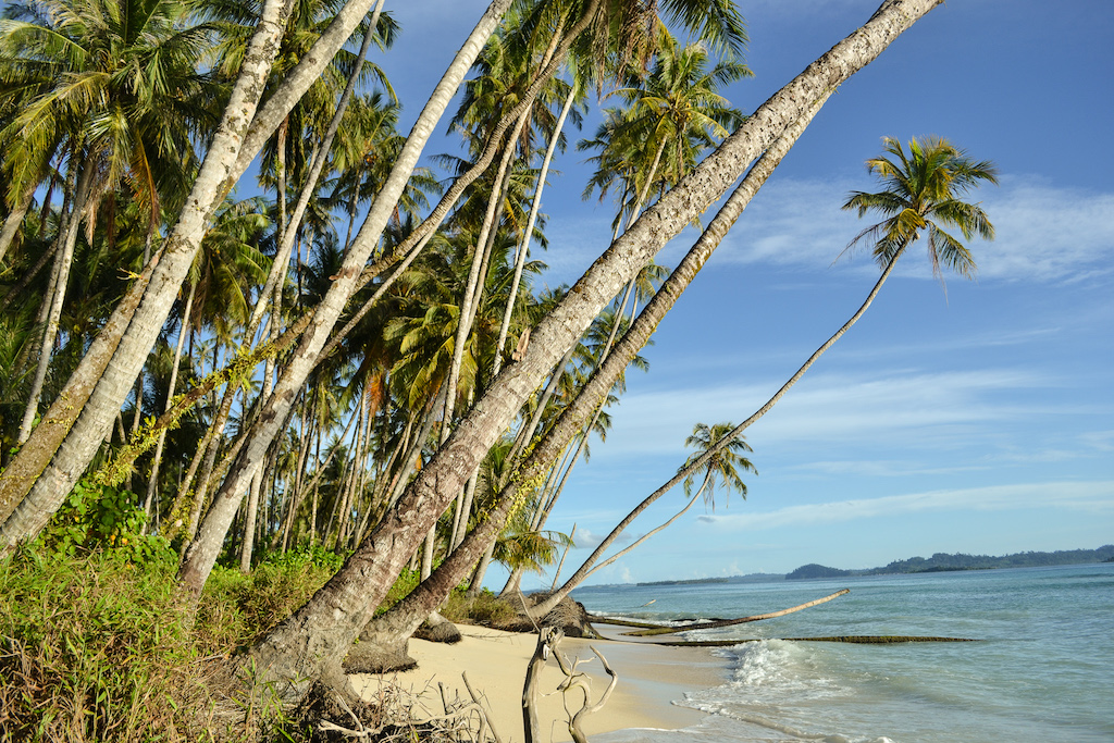 Banyak-Islands-Palmen-1