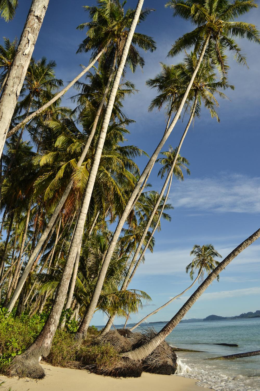 Banyak-Islands-Palmen