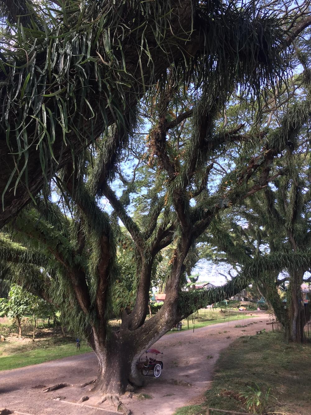 Banyuwangi-Magischer-Wald