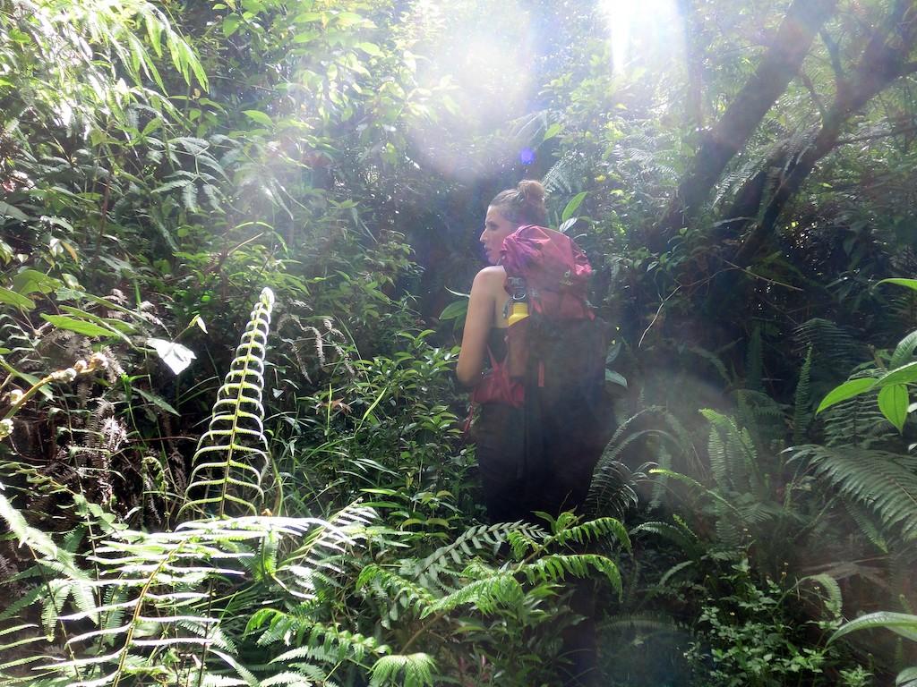 Batukaru-Dschungel