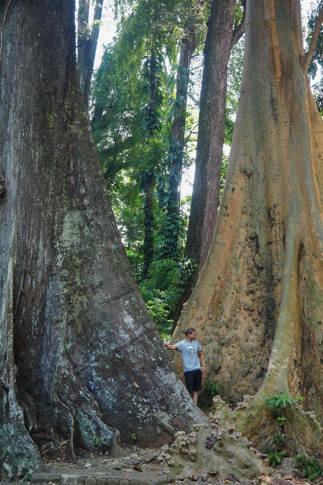 Botanischer-Garten-Bogor-1
