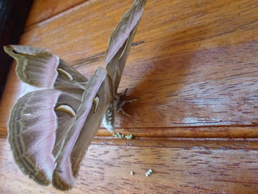 Butterfly - Foto von Michael Leitzinger