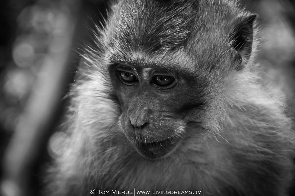 monkey-forest-ubud-reiseroute