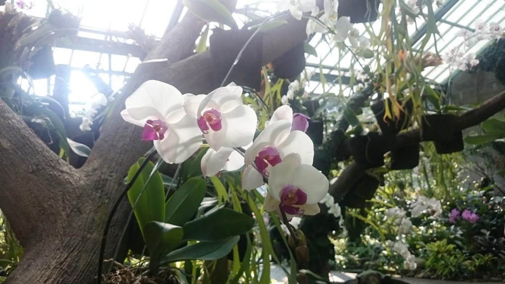 Alleine das Orchiden-Haus macht den Botanischen Garten einen Besuch wert