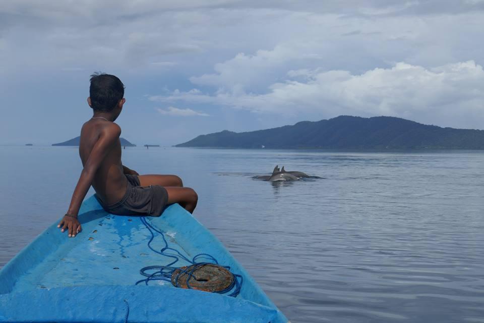 Delfine-Raja-Ampat