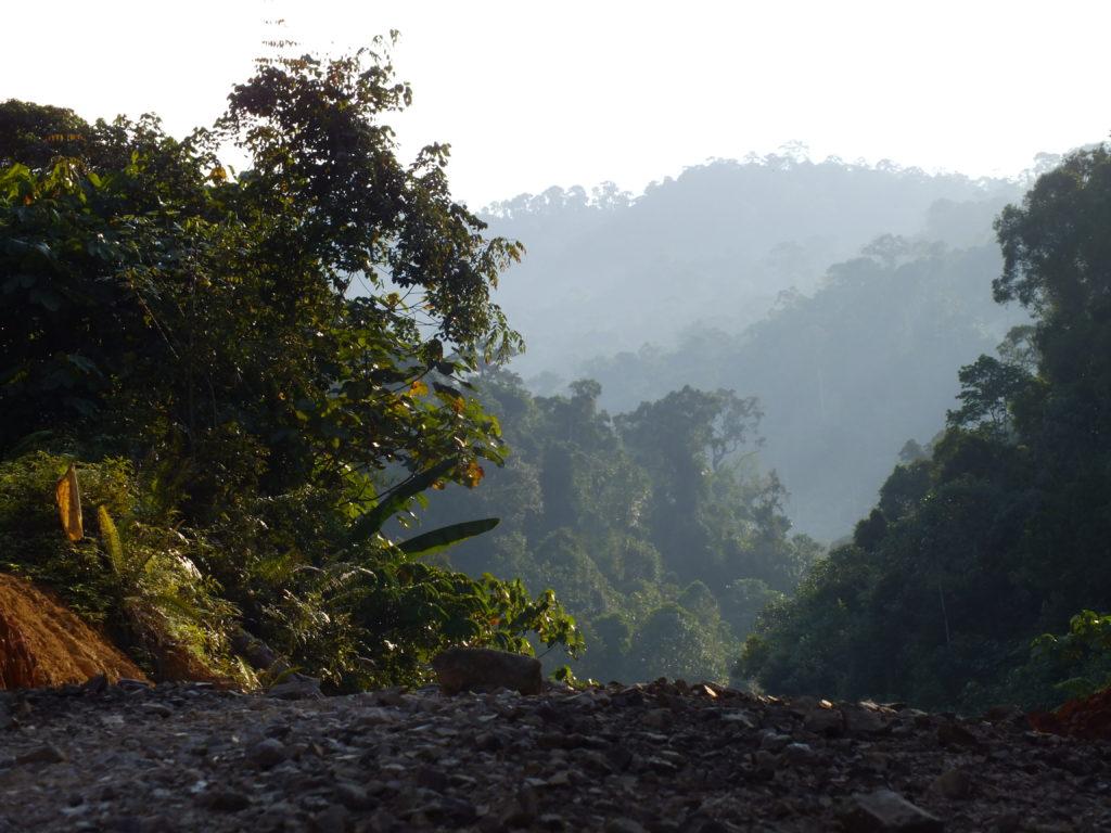 Der Weg in den Wald
