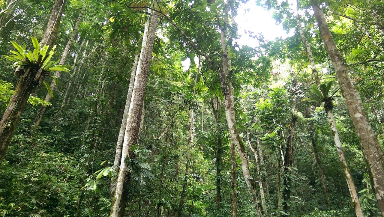 Dschungel Tentena