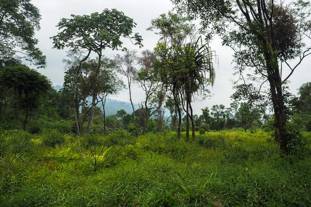 Dschungel-gunung-salak