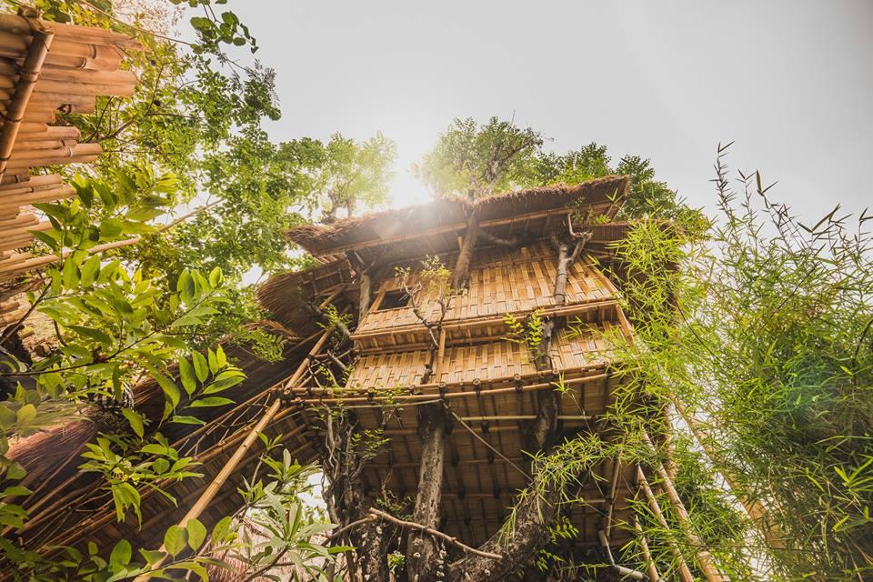 Eco Tree House Amed 2