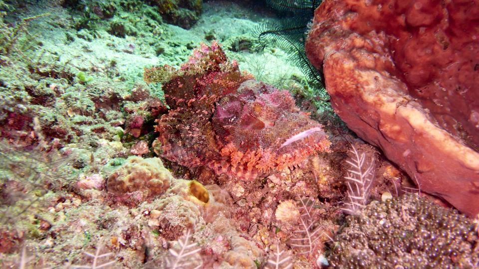 Faszination Unterwasser - Foto von Pierre Braunschweig