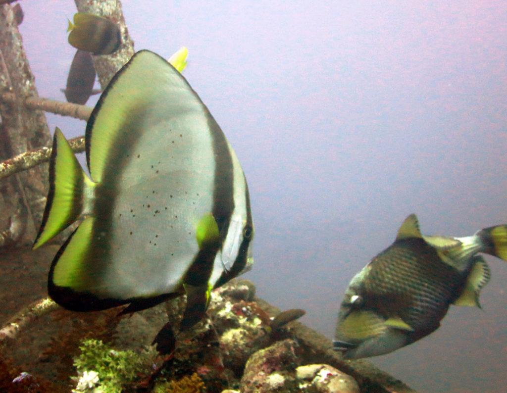 Fischvielfalt am Kubu-Wrack
