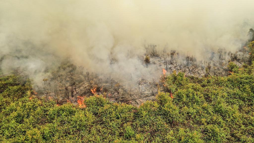 waldbrand-indonesien