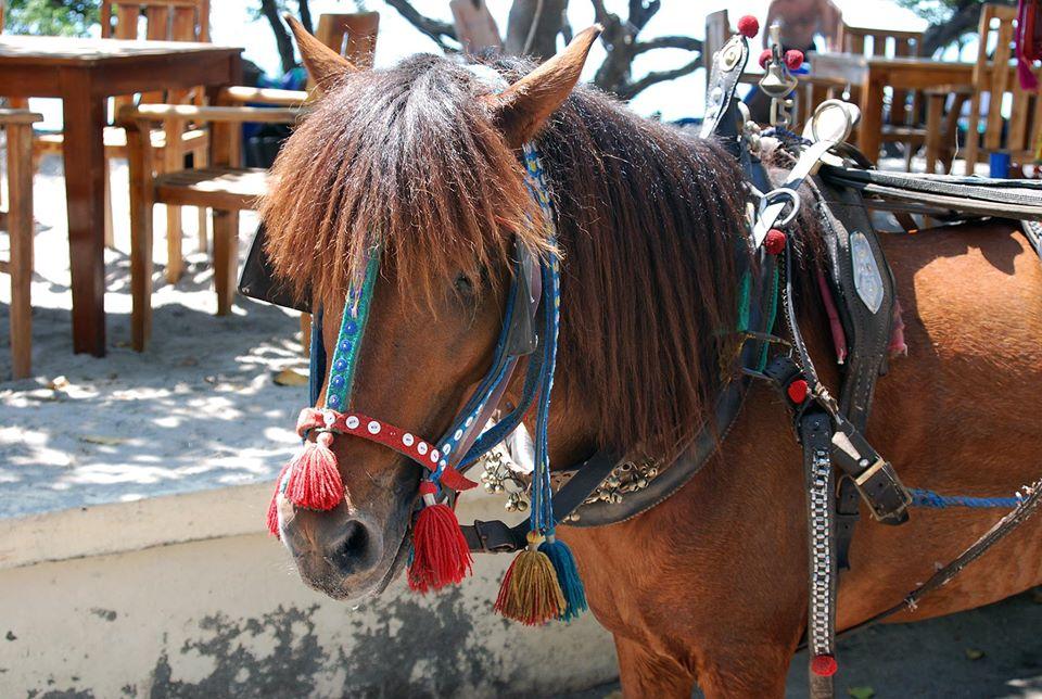 Horses-of-Gili