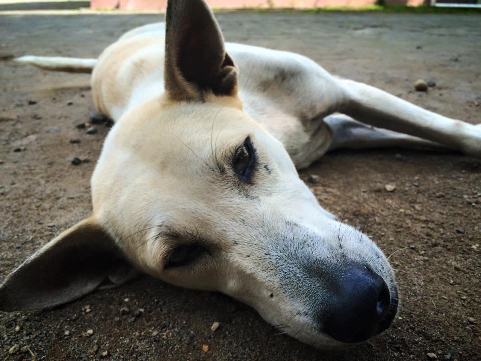 Hund auf Lombok - Foto von Möglicherweise Anna Re