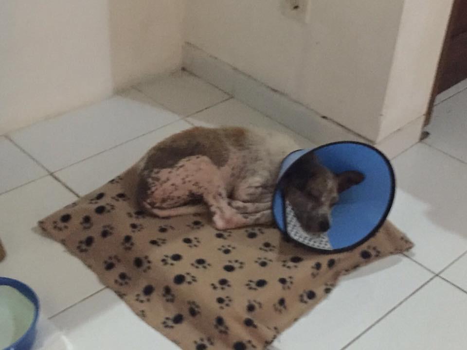Hund-von-Bali-nach-Deutschland-bringen - Erholung im zwischenheim