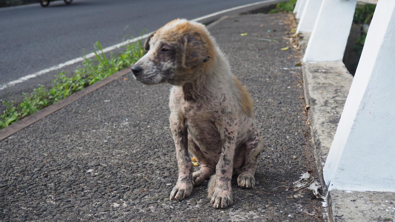Hund-von-Bali-nach-Deutschland-bringen-Tag-des-Findens
