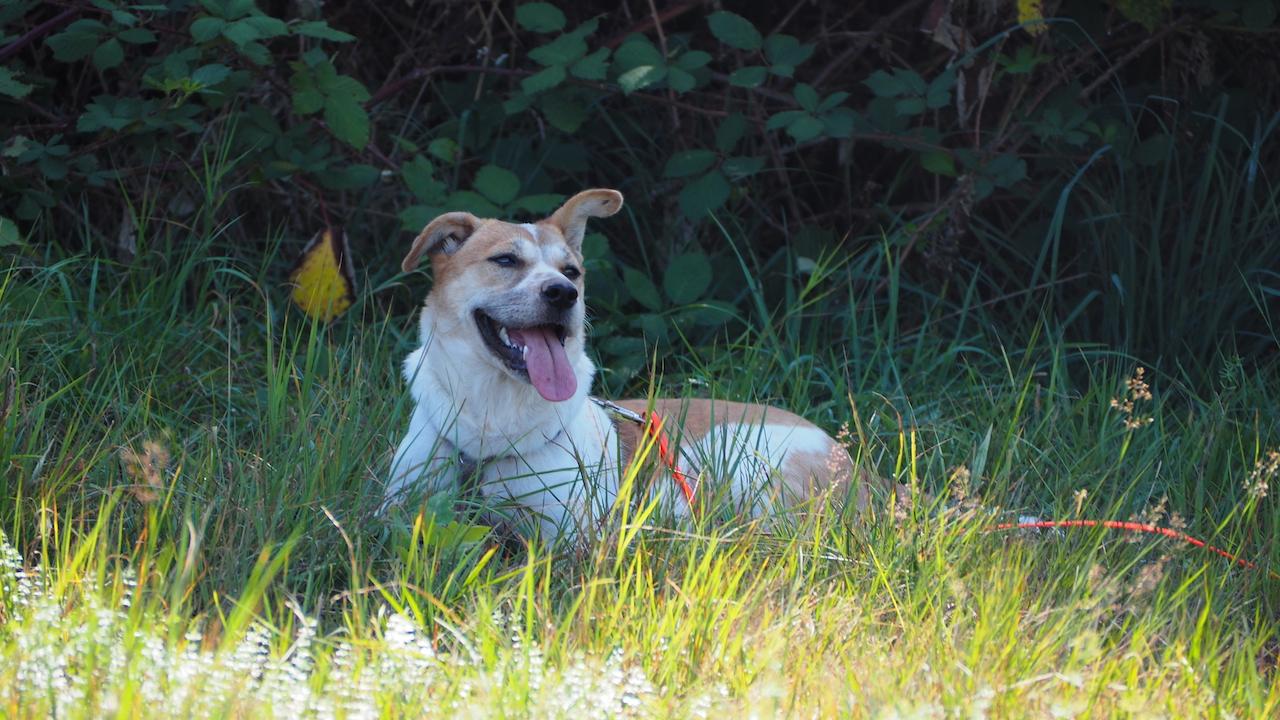 Hund-von-Bali-nach-Deutschland-bringen-in-Deutschland