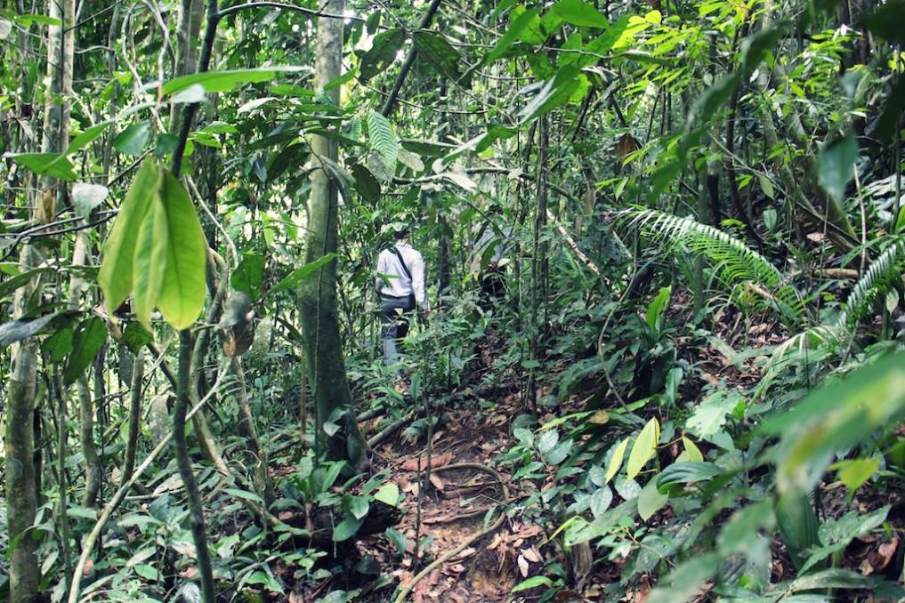 Trekking im Gunung Leuser Nationalpark