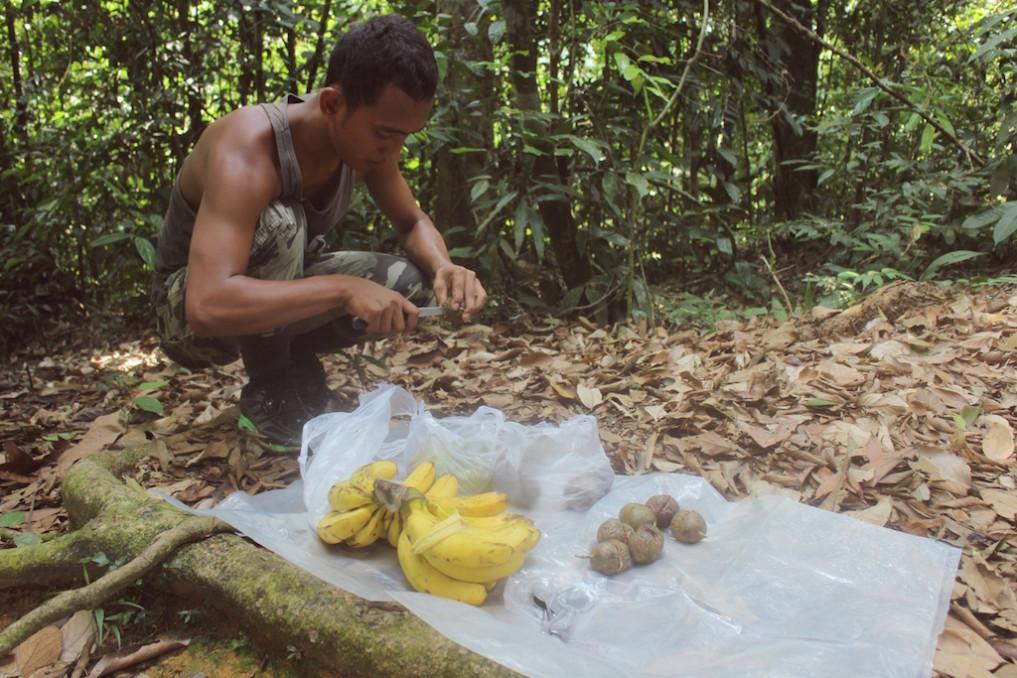 Kleiner Snack im Dschungel