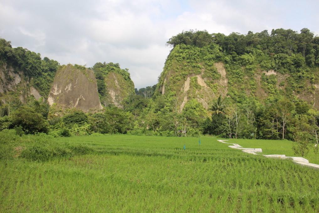 Bukittinggi Reisfelder