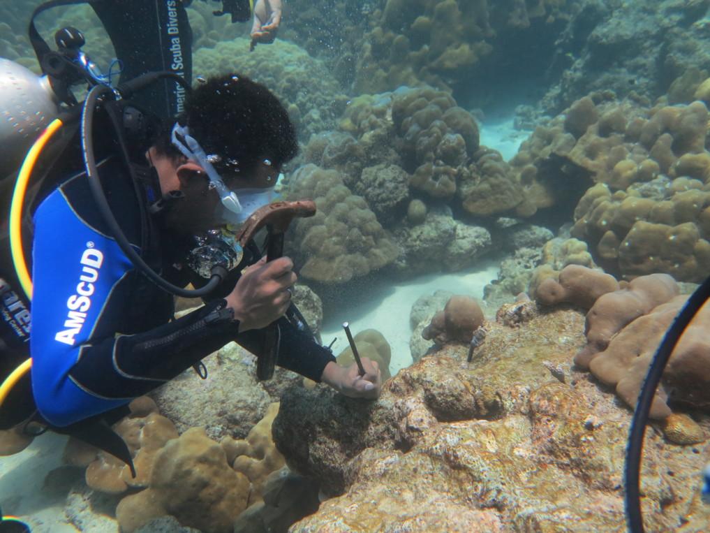 Freddies Korallenzucht