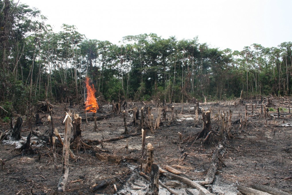 Indonesia's environmental issues - deforestation 1 by internet